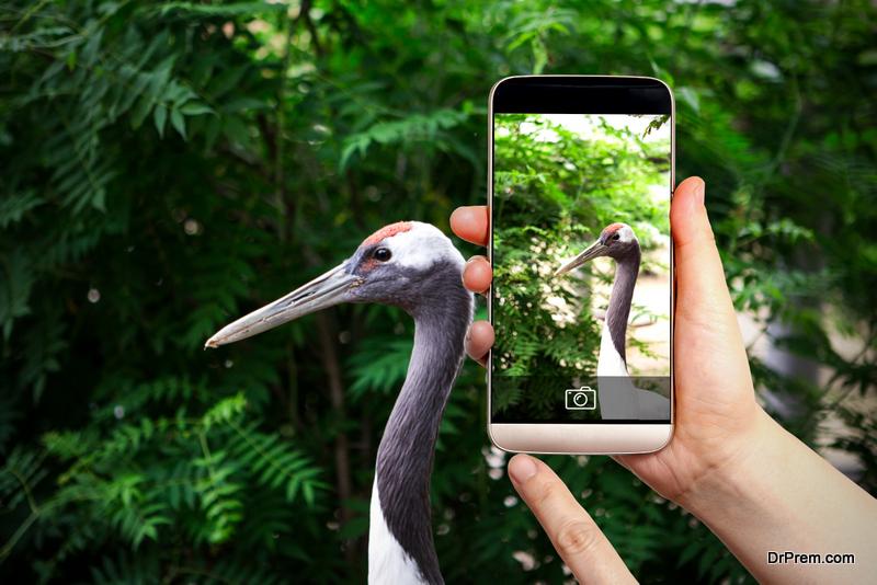 Wildlife-Photography.